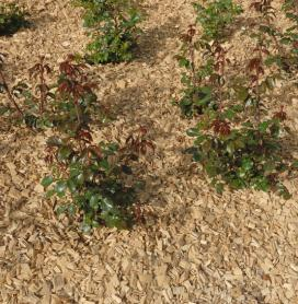 Distributions gratuites de compost et de broyage des vos branches