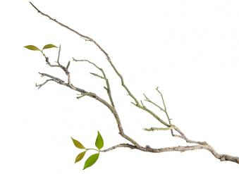 Bois (branches…)